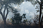 Smoke in miombo woodland, Kafue National Park, Zambia