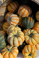 Squash<br />