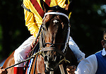 09 August 1: Kensei prior to the 46th running of the grade 2 Jim Dandy Stakes for three year olds at Saratoga Race Track in Saratoga Springs, New York.