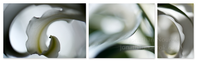 Close-up photographic triptych of white lily flowers.
