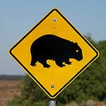 Panneau attention wombat . 100 km au nord d'Adélaide (Australie du Sud)
