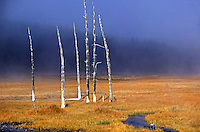 Meadow with fall colored grass and dead trees and stream. Yellowstone National Park, Wyoming
