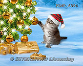 Marek, CHRISTMAS ANIMALS, WEIHNACHTEN TIERE, NAVIDAD ANIMALES, photos+++++,PLMP6994,#XA# cat  santas cap,