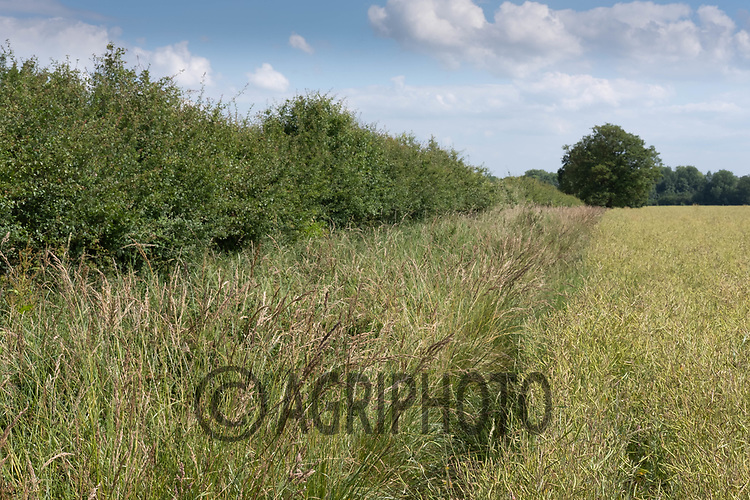 Field margin<br /> ©Tim Scrivener Photographer 07850 303986<br />      ....Covering Agriculture In The UK....
