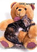 Xavier, ANIMALS, REALISTISCHE TIERE, ANIMALES REALISTICOS, cats, photos+++++,SPCHCATS872,#a#, EVERYDAY