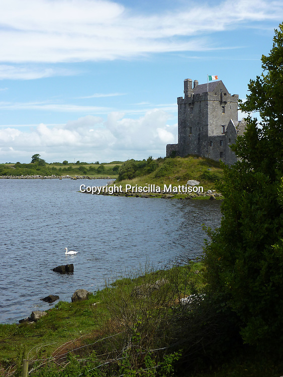 County Galway, Republic of Ireland - July 17, 2010:  A swan floats in front of Dunguaire Castle.