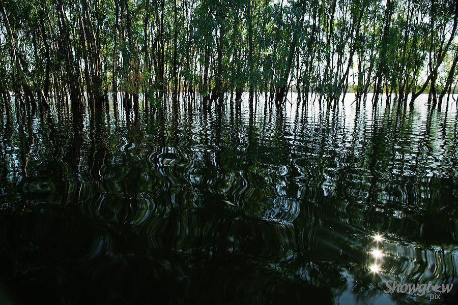 Image Ref: W020<br /> Location: Lake Hattah, Hattah-Kulkyne National Park<br /> Date: 14th May 2014