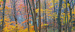 Autumn colors, Smoky Mountains, North Carolina, USA<br /> I shot this just as Hurricane Sandy was gaining strength and rumbling up the mid-Atlantic coast.  A day later all the leaves were stripped from the trees.