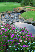 Stream and impatiens flowers with bridge at gof course. Palm desert, California