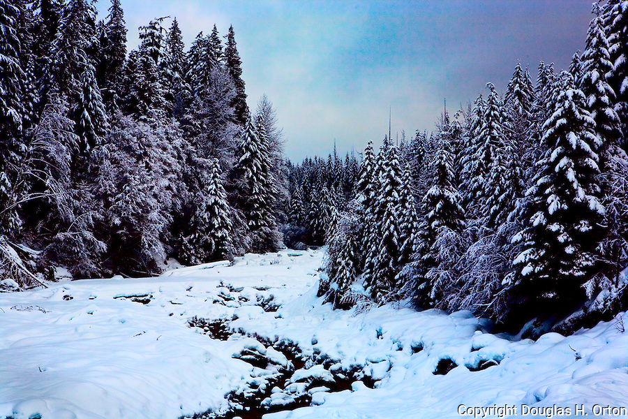 Kautz Creek, near Longmire in Mount Rainier National Park lies frozen in winter snow.