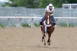 June 5, 2015: Belmont Stakes contender Frammento, trained by Nick Zito, gallops at Belmont Park, Elmont, NY. Joan Fairman Kanes/ESW/CSM