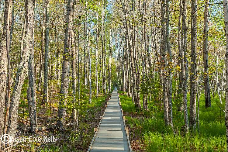 The Jessup Path in Acadia National Park, Maine, USA