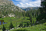 forest, North Inlet, subalpine, forest, Rocky Mountain National Park, Colorado, USA