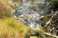Hot stream in Wai-O-Tapu Thermal Wonderland, Rotorua Region, Central Plateau, North Island, New Zealand, NZ