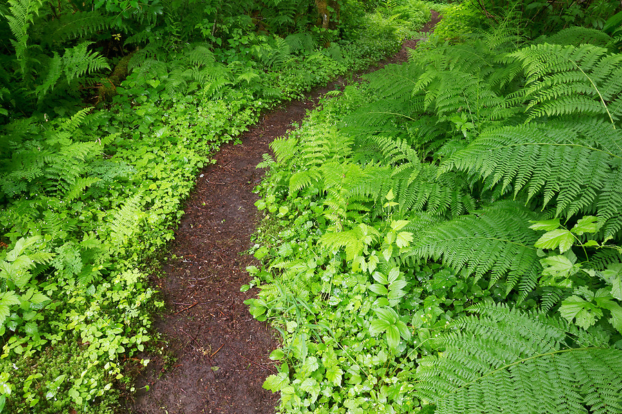 Baker River Trail running through old growth forest, North Cascades National Park, Whatcom County, Washington State, USA