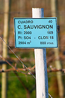 A sign saying that this plot is planted with Cabernet Sauvignon. Vinedos y Bodega Filgueira Winery, Cuchilla Verde, Canelones, Montevideo, Uruguay, South America
