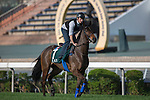 SHA TIN,HONG KONG-DECEMBER 09: Garlingari trained by Corine Barande-Barbe,exercises in preparation for the Hong Kong at Sha Tin Racecourse on December 9,2016 in Sha Tin,New Territories,Hong Kong (Photo by Kaz Ishida/Eclipse Sportswire/Getty Images)