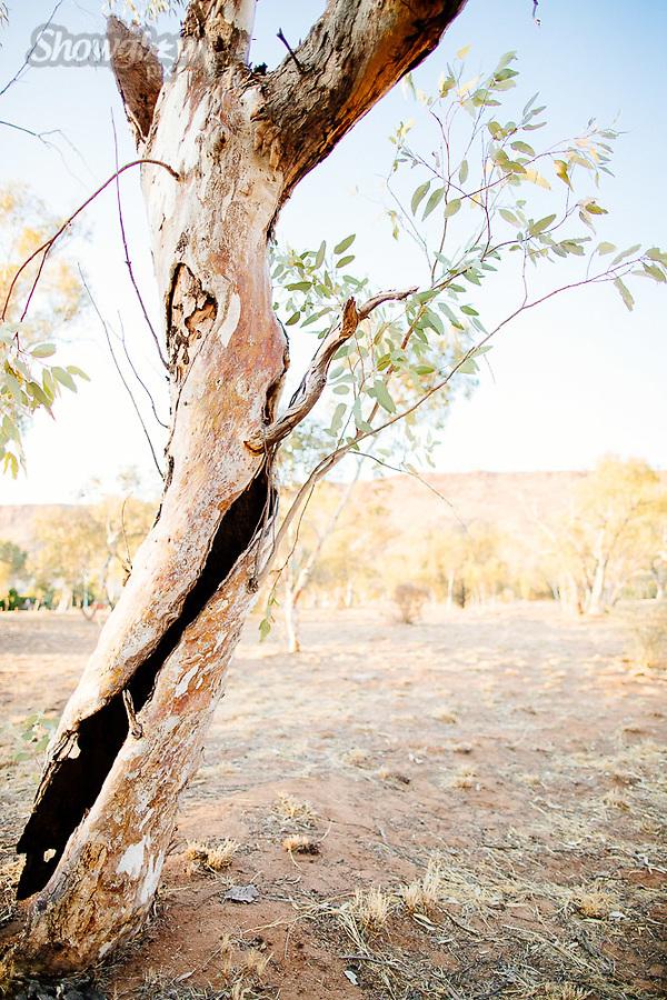 Image Ref: CA632<br /> Location: Alice Springs<br /> Date of Shot: 09.09.18