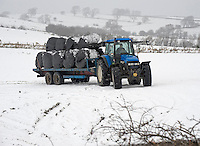 Transporting big bales of silage in the snow, Slaidburn, Lancashire....Copyright..John Eveson, Dinkling Green Farm, Whitewell, Clitheroe, Lancashire. BB7 3BN.01995 61280. 07973 482705.j.r.eveson@btinternet.com.www.johneveson.com