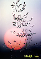 SU22-005a  Sun back lighting grasses