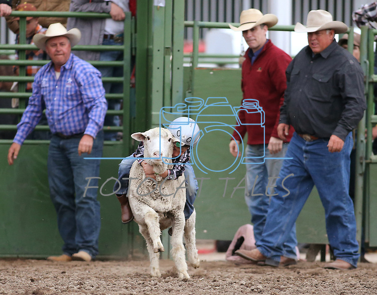 Chad Breeden, 6, competes in the mutton busting event at the Smackdown at Fuji Park in Carson City, Nev., on Friday, June 5, 2015. <br /> Photo by Cathleen Allison/Nevada Photo Source