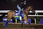 DEL MAR, CA - NOVEMBER 01: Heart to Heart, owned by Terry Hamilton and trained by Brian A. Lynch, exercises in preparation for Breeders' Cup Mile during morning workouts at Del Mar Thoroughbred Club on November 1, 2017 in Del Mar, California. (Photo by Michael McInally/Eclipse Sportswire/Breeders Cup)