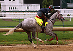 LOUISVILLE, KY - APRIL 23: Lani (Tapit x Heavenly Romance, by Sunday Silence) exercises on the track at  Churchill Downs, Louisville KY in preparation for the Kentucky Derby. Owner Ms. Yoko Maeda, trainer Mikio Matsunaga. (Photo by Mary M. Meek/Eclipse Sportswire/Getty Images)