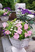 Cement pot container garden of annual petunia, Leucanthemum, Helioptropium heliotrope, bacopa, on stone patio near chair patio furniture, pink and purple color theme, harmonious plantings