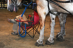 Boy and draft horses waiting their turns in the horse pull competition at Cheshire Fair in Swanzey, New Hampshire USA