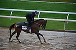 October 28, 2015:  Red Vine, trained by Christophe Clement and owned by Jon and Sarah Kelly & Don and Joan Cimpl, exercises in preparation for the Las Vegas Breeders' Cup Dirt Mile at Keeneland Race Track in Lexington, Kentucky on October 28, 2015. John Voorhees/ESW/CSM