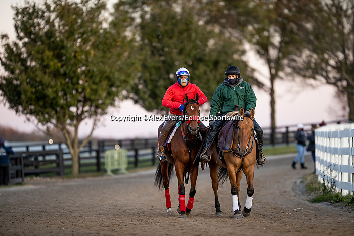 November 3, 2020: Lady Prancealot, trained by trainer Richard Baltas, exercises in preparation for the Breeders' Cup Filly & Mare Turf at Keeneland Racetrack in Lexington, Kentucky on November 3, 2020. Alex Evers/Eclipse Sportswire/Breeders Cup