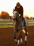 Tacitus, trained by trainer William I. Mott, exercises in preparation for the Breeders' Cup Classic at Keeneland Racetrack in Lexington, Kentucky on November 3, 2020.