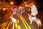 A canine group with lit-up dogs in Sutter Creek's annual Parade of Lights Christmas parade downtown on a rainy night in the  Mother Lode of Calif.