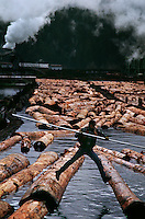 "Worker holding a pike pole jumps from log to log in the mill pond. ""Company towns"" such as Scotia near Eureka developed in 1880s when logging operations built sawmills. Old growth timber is cut in local forests although there are economic and environmental pressures on the industry. Loggers have the second most dangerous job in the U.S."