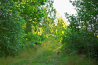 Overgrown Country road. Through the forest. Smaland region. Sweden, Europe.