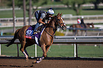 OCT 29 2014:Dayatthespa, trained by Chad Brown, exercises in preparation for the Breeders' Cup Filly and Mare Turf at Santa Anita Race Course in Arcadia, California on October 29, 2014. Kazushi Ishida/ESW/CSM