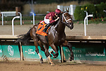 September 18, 2021: Shedaresthedevil #7, ridden by jockey Florent Geroux wins the Locust Grove Stakes (Grade 3) at Churchill Downs in Louisville, K.Y. on September 18th, 2021. Jessica Morgan/Eclipse Sportswire/CSM