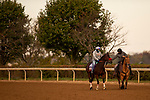 October 27, 2019 : exercises in preparation for the Breeders' Cup World Championships at Santa Anita Park in Arcadia, California on October 27, 2019. Carolyn Simancik/Eclipse Sportswire/Breeders' Cup/CSM