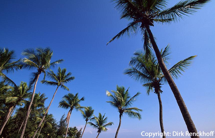 Dominikanische Republik, Palmen beim Acuario Nacional in Santo Domingo