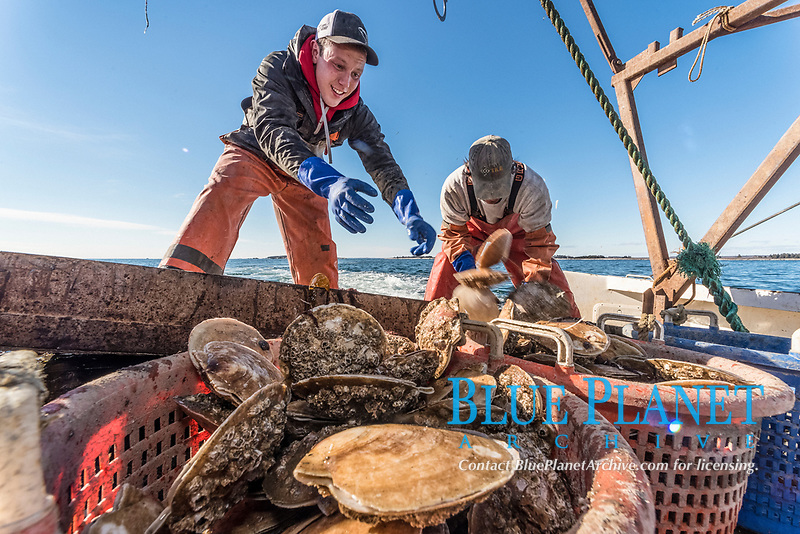 scallop fishing, Cousins Island, Maine, USA, Atlantic Ocean