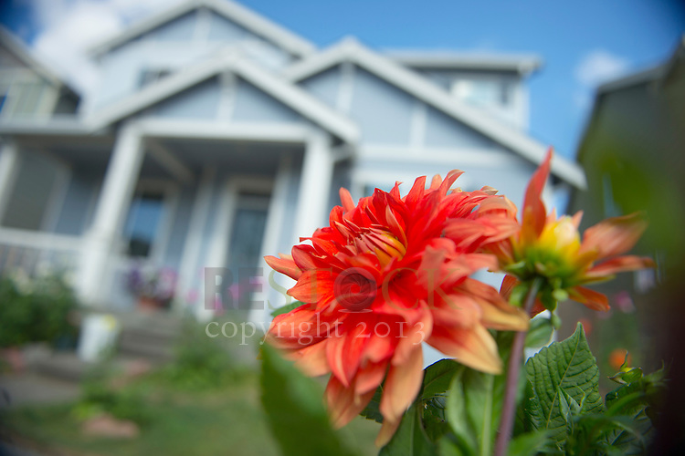 Bright Red Flower and Blue Home