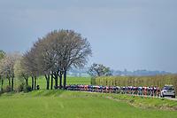 Peloton in spring<br /> <br /> 52nd Amstel Gold Race (1.UWT)<br /> 1 Day Race: Maastricht › Berg en Terblijt (264km)