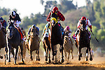 Nov. 03, 2012 - Arcadia, California, U.S -Trinniberg (KY)ridden by Willie Martinez and trained by Shivananda Parbhoo, wins the Xpressbet Breeders' Cup Sprint (Grade I) at Santa Anita Park in Arcadia, CA.
