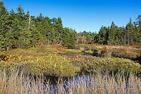 Swampy bogs, Pine Barrens, New Jersey, USA