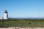 Researcher walking towards lighthouse (staging area), Bird Island Light, Bird Island, Marion, Massachusetts, Buzzards Bay, Cape Cod.