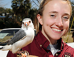 The zoo's Sarah Jane Turner shows off an African pygmy falcon at the Beastly Brunch at the Houston Zoo Sunday Feb. 28,2010. (Dave Rossman Photo)