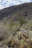 Sonoran Desert at Anza Borrego California State Park
