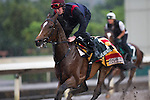 SHA TIN,HONG KONG-APRIL 29: Highland Reel,trained by Aidan O'Brien,exercises in preparation for the Champions Mile at Sha Tin Racecourse on April 29,2016 in Sha Tin,New Territories,Hong Kong (Photo by Kaz Ishida/Eclipse Sportswire/Getty Images)