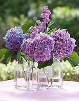 Four glass bottles are grouped together in a simple arrangement of violet stocks and hydrangeas