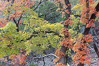 Lost Maples State Natural Area, November 2014